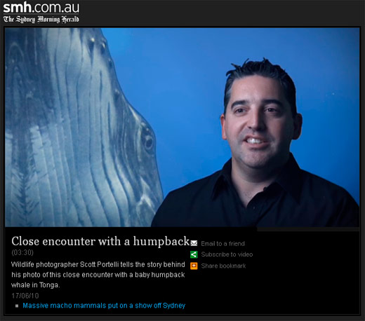 Sydney Morning Herald Interview Scott Portelli