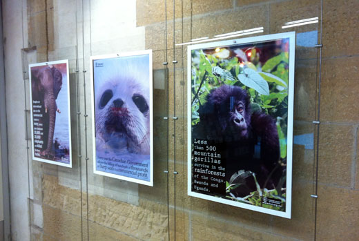 HSI Extinction Denied Exhibition