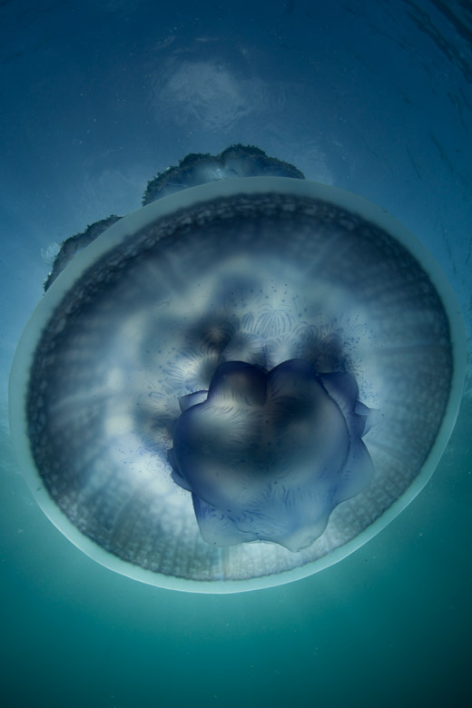 International Loupe Awards 2012 jellyfish
