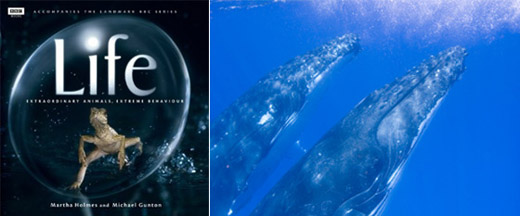 BBC Life book - whales