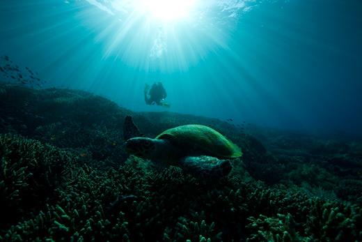 SUBIOS-2009-Turtle