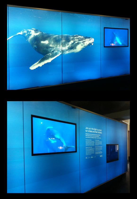 IFAW - We're for Whales exhibition Sydney Customs House