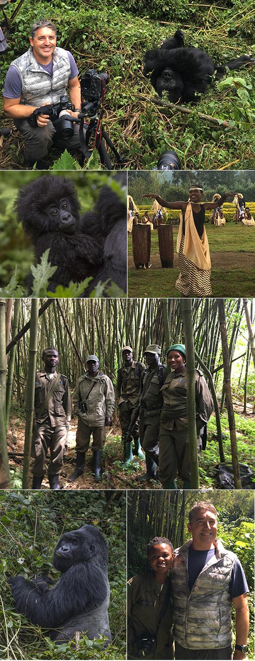 Destinations - Rwanda, Congo, Uganda with mountain gorillas