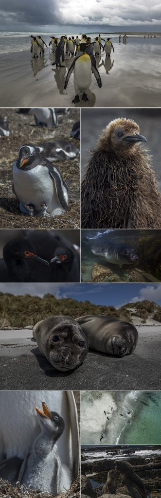 Destinations Falkland Islands for penguins and seals