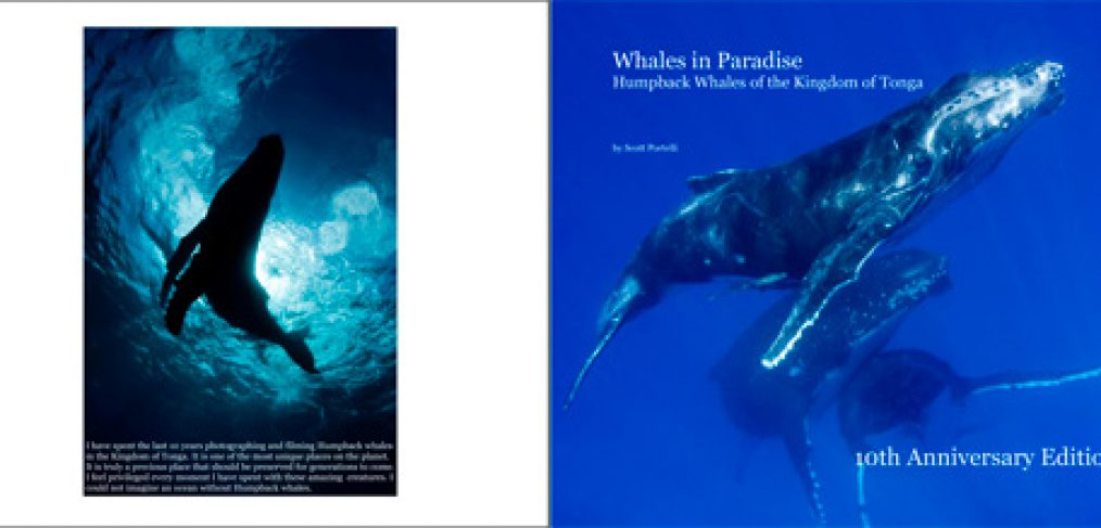 whales-in-paradise-book