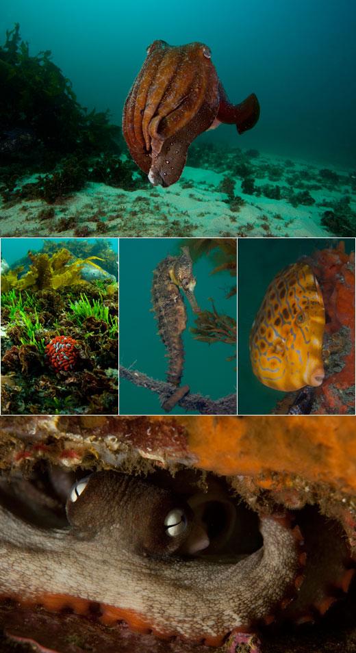 Diving Sydney Underwater Marine life