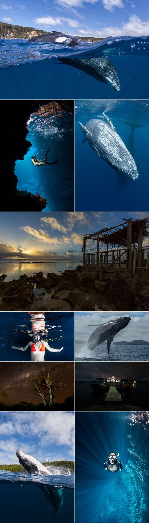 Tonga 2014 season still paradise collage swimming with humpback whales  and through caves