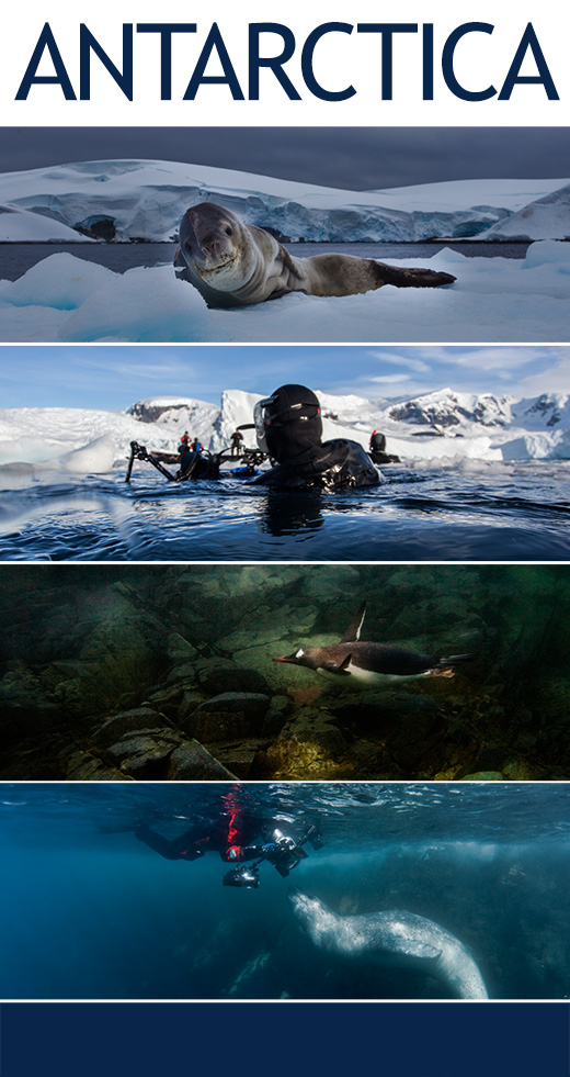 Poster-Antarctic Circle-Tour-Page-Diving-Underwater-with-Seals-and-Penguins