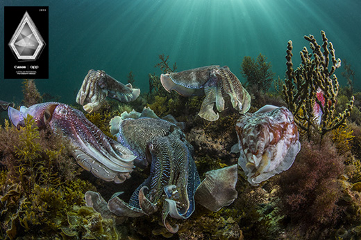 cuttlefish award 2015