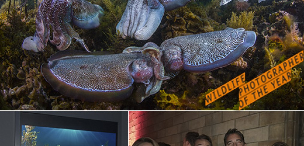 Wildlife Photographer of the Year awarded image of giant cuttlefish plus a photo of Scott Portelli (photographer) and friends