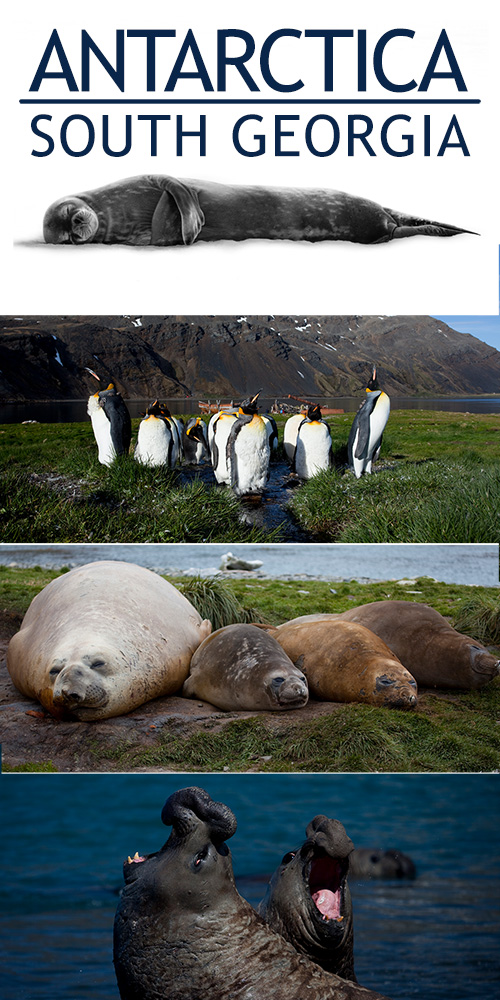 south-georgia-web-collage-penguins-seals-elephant-seals