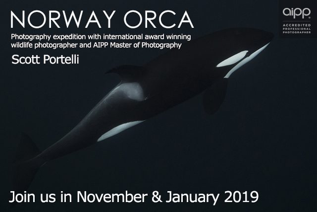 orcas norway promotional image scott portelli