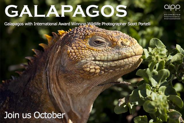 Galapagos tour promotional image