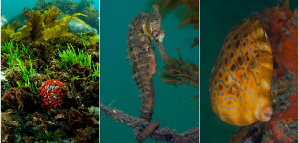 Sydney Underwater Marine life