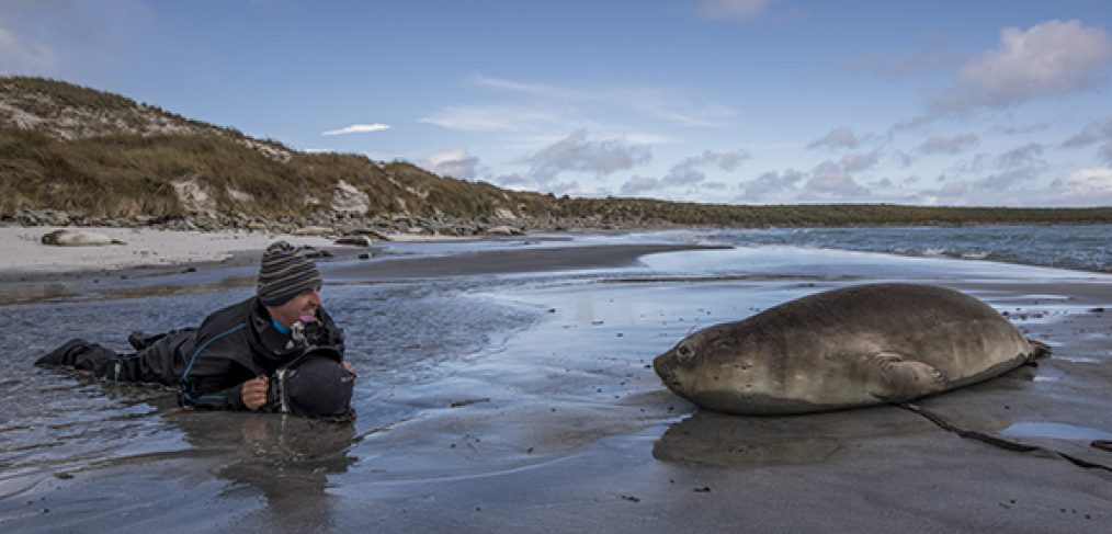 Scott Portelli photgraphing an Elephant Seal
